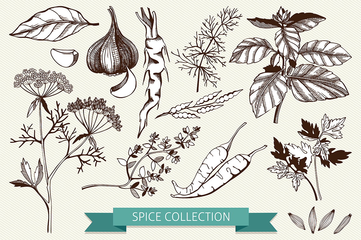 Ink Hand Drawn Spice Collection example image 5