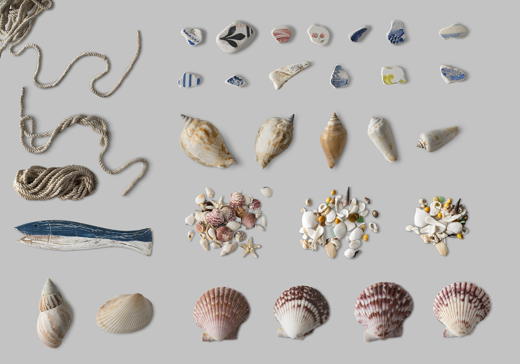Shells PNG Collection Photo Clip Art example image 3