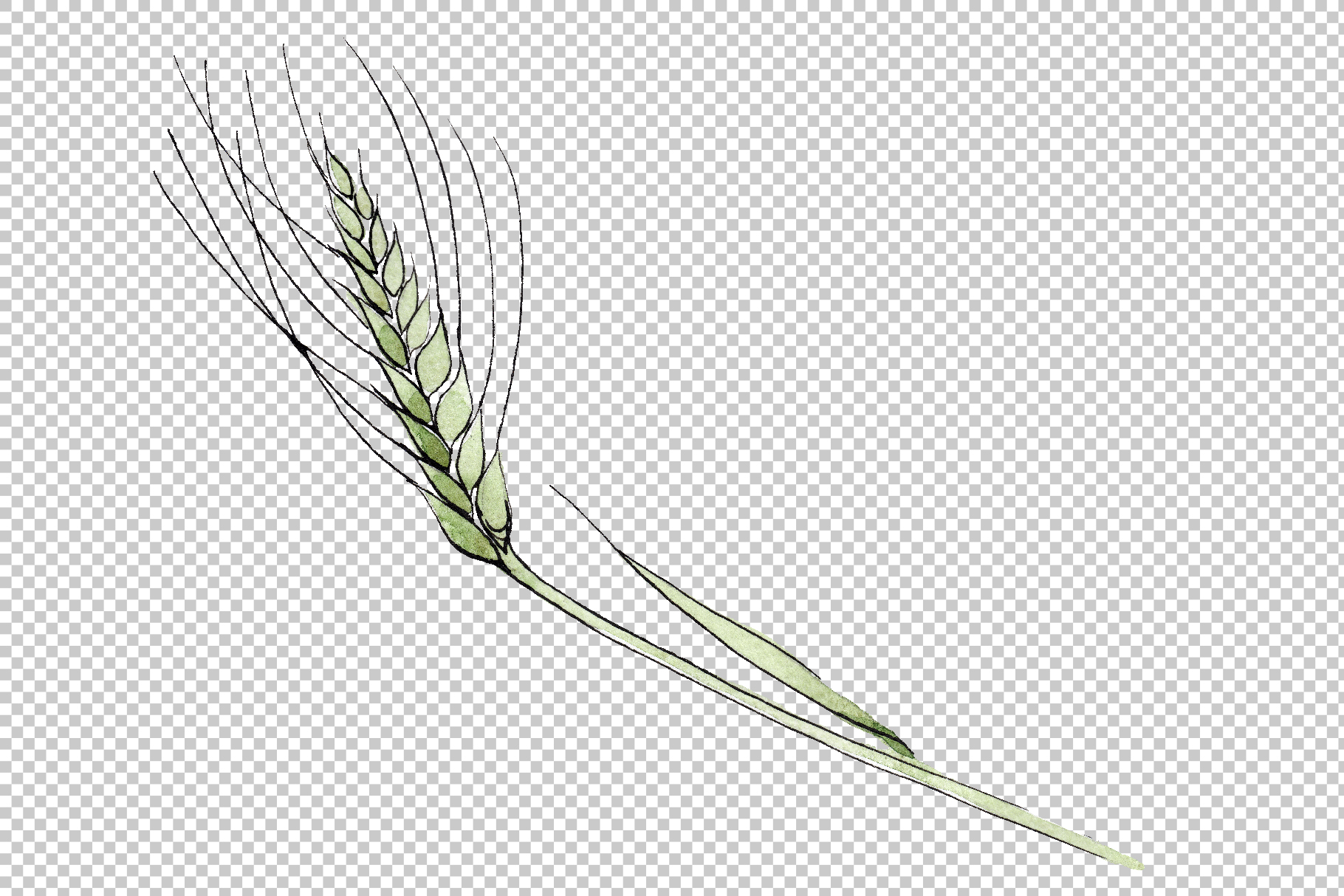 Spike of wheat Watercolor png example image 7