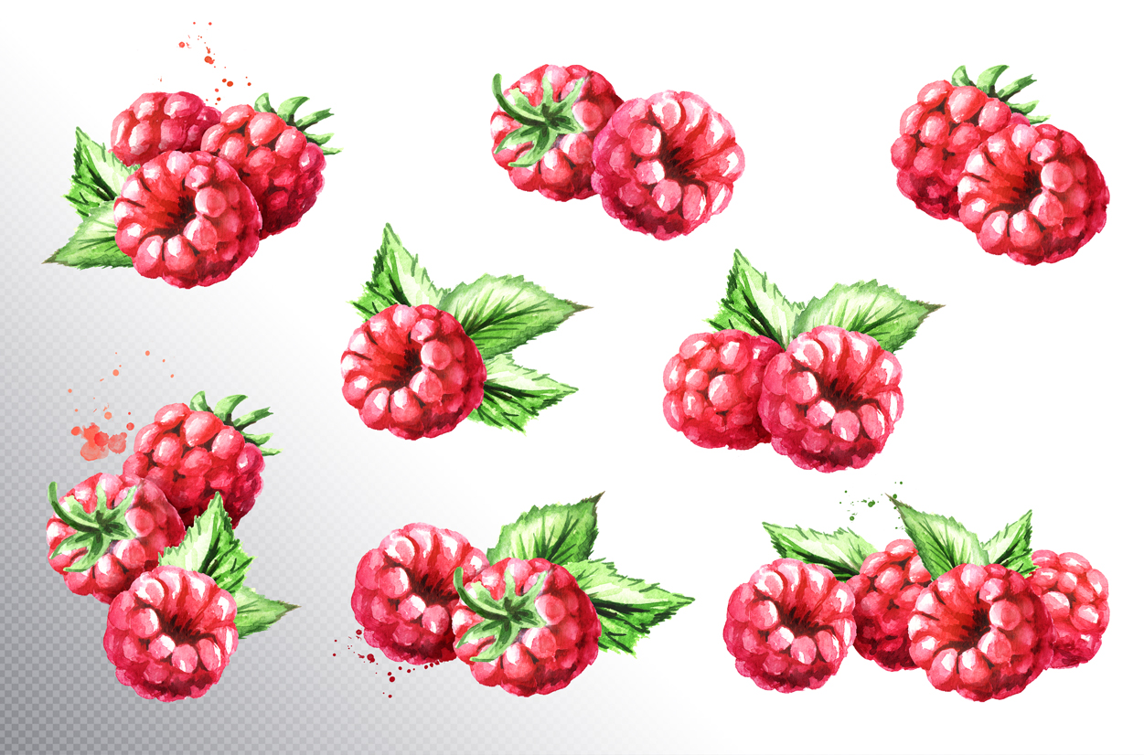 Raspberry. Watercolor collection example image 2