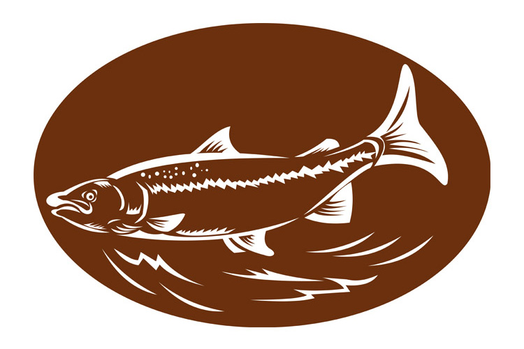 speckled spotted trout fish retro woodcut example image 1