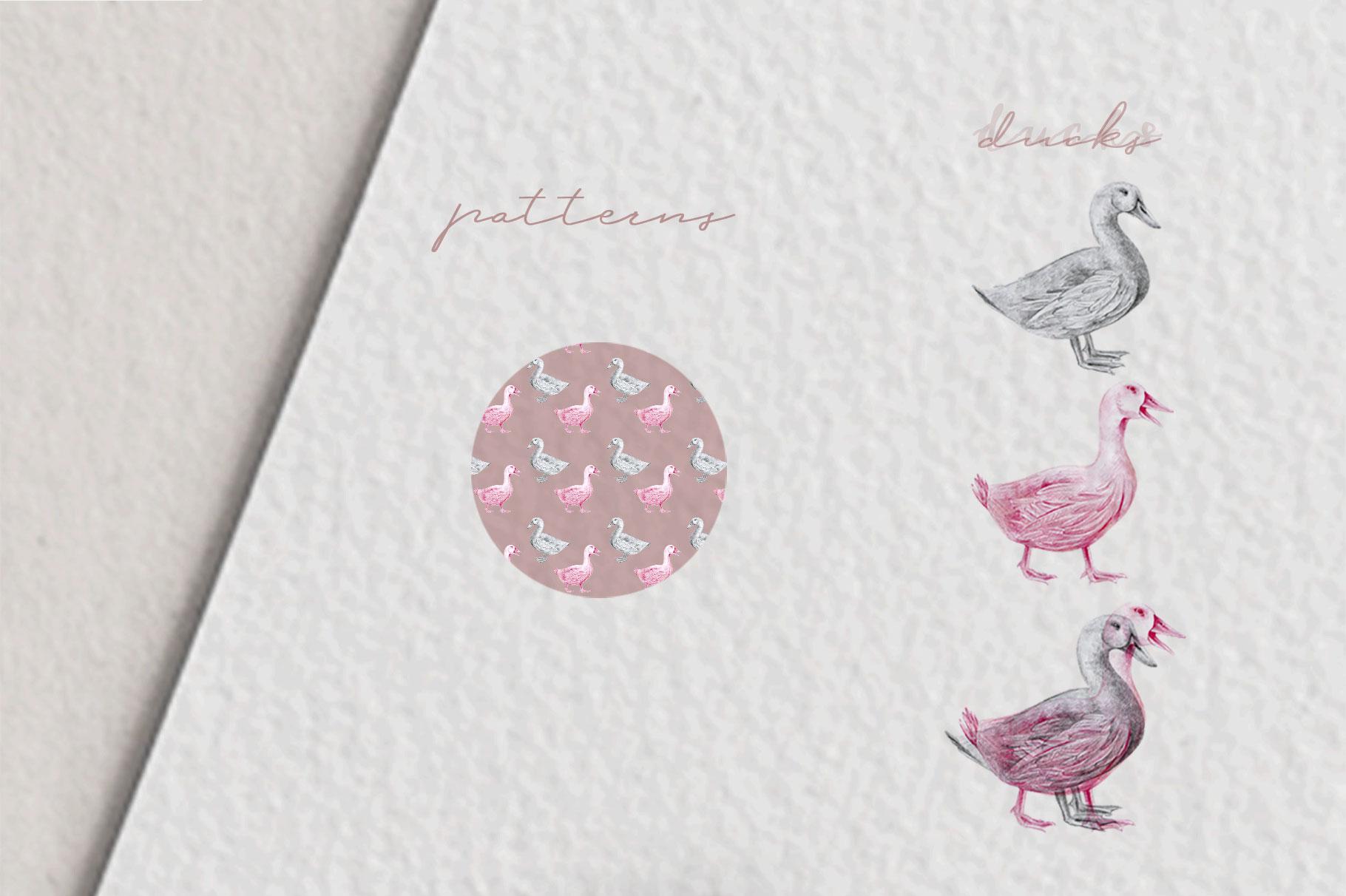 Hand drawn Ducks Illustrations example image 3