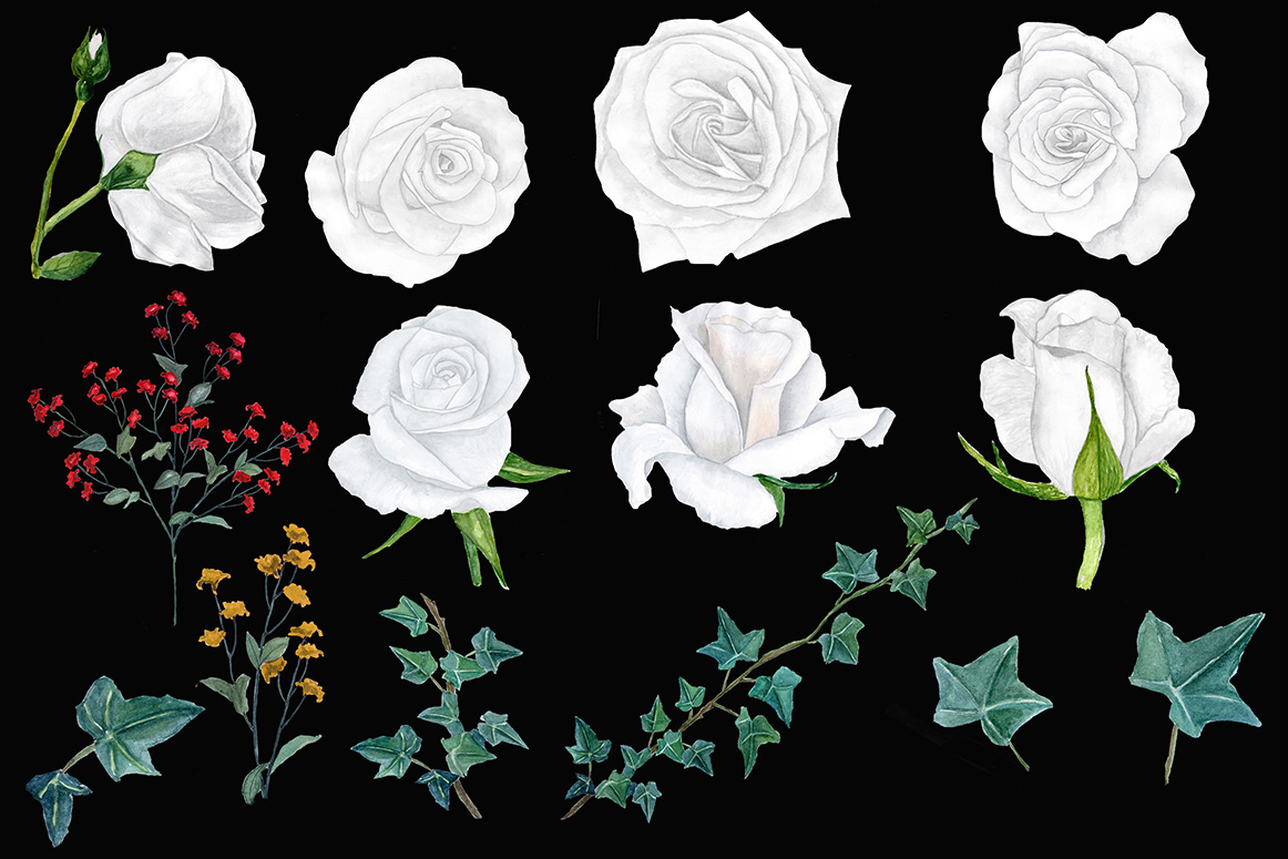Watercolor white roses clipart example image 3