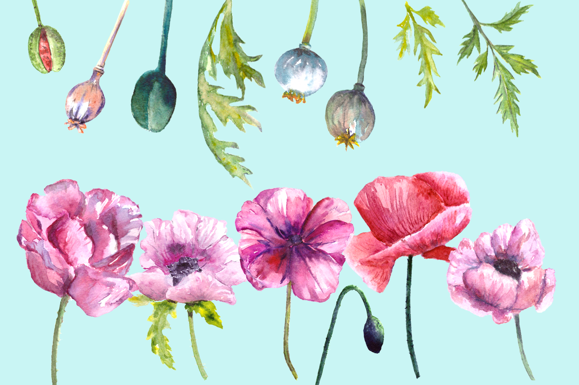 Watercolor Summer Poppies Clip Art - Bonus Wreath and Border example image 3