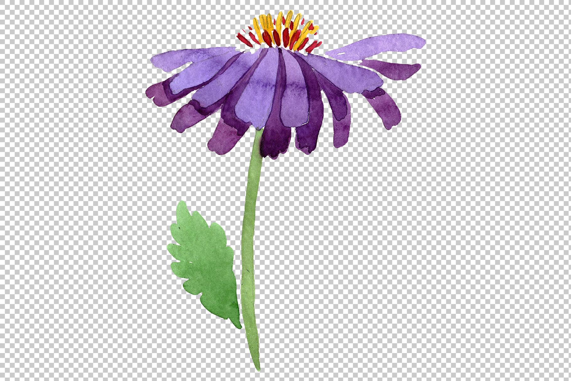 Asters Watercolor png example image 4