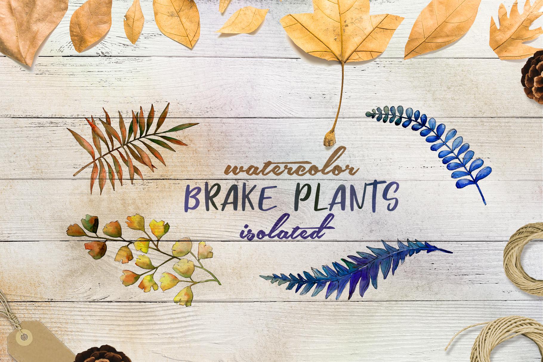 Brake plants PNG watercolor set example image 2