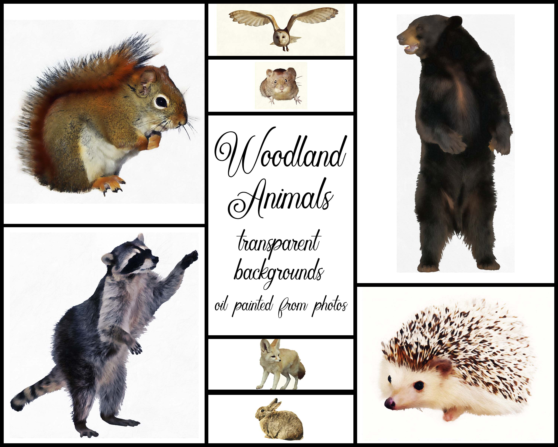 Woodland Animal Set V1 example image 5