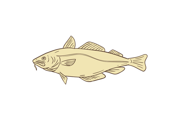 Atlantic Cod Fish Drawing example image 1