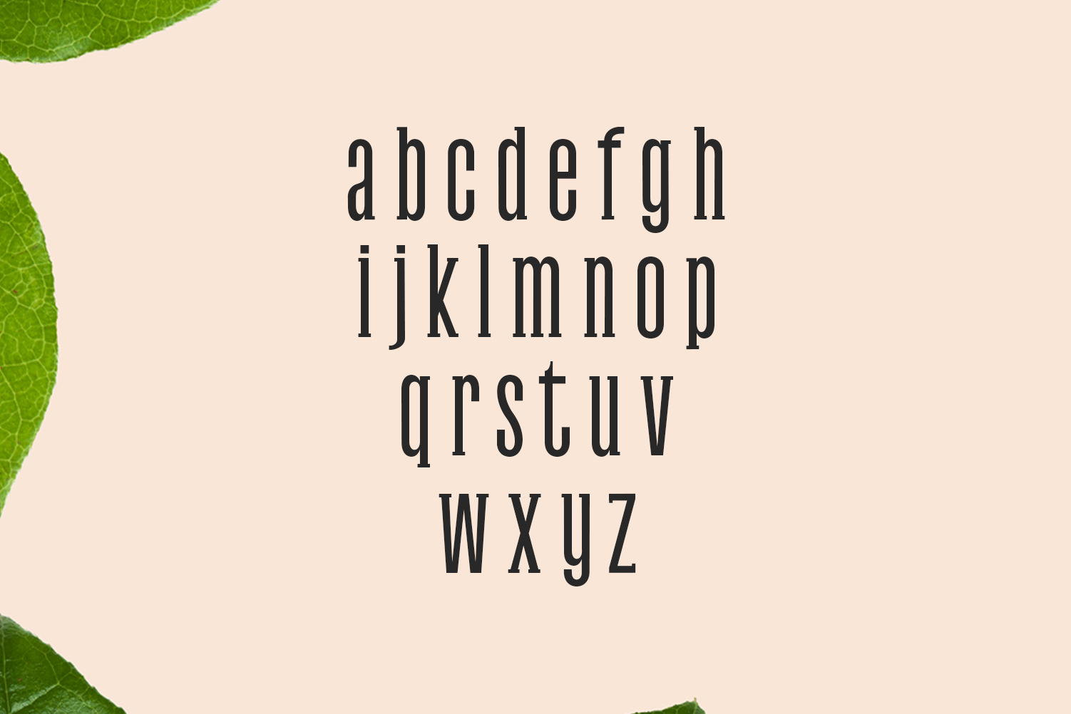 Galvin Slab Serif Font Family Pack example image 3