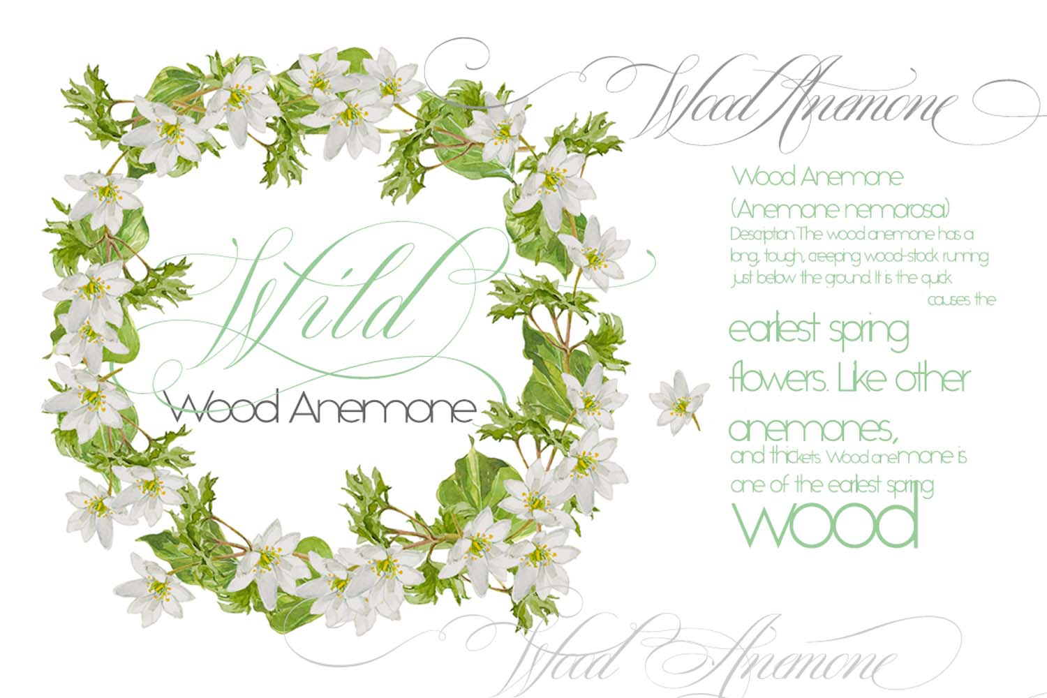 White Watercolor Bouquets & Wreaths example image 5
