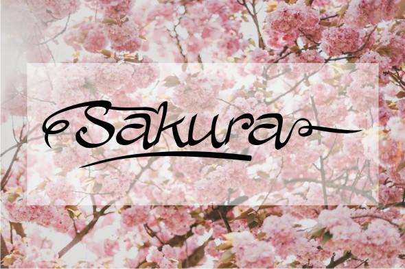 Allura Script example image 3