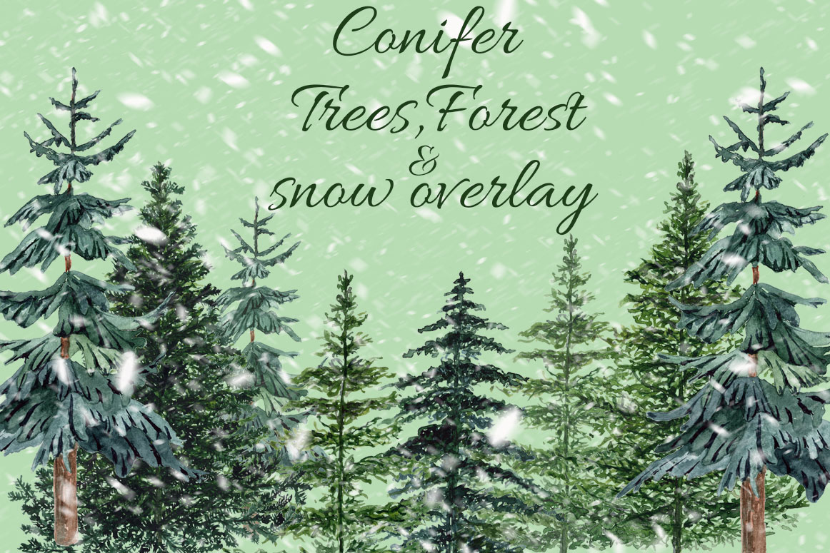 Conifers trees clipart example image 1