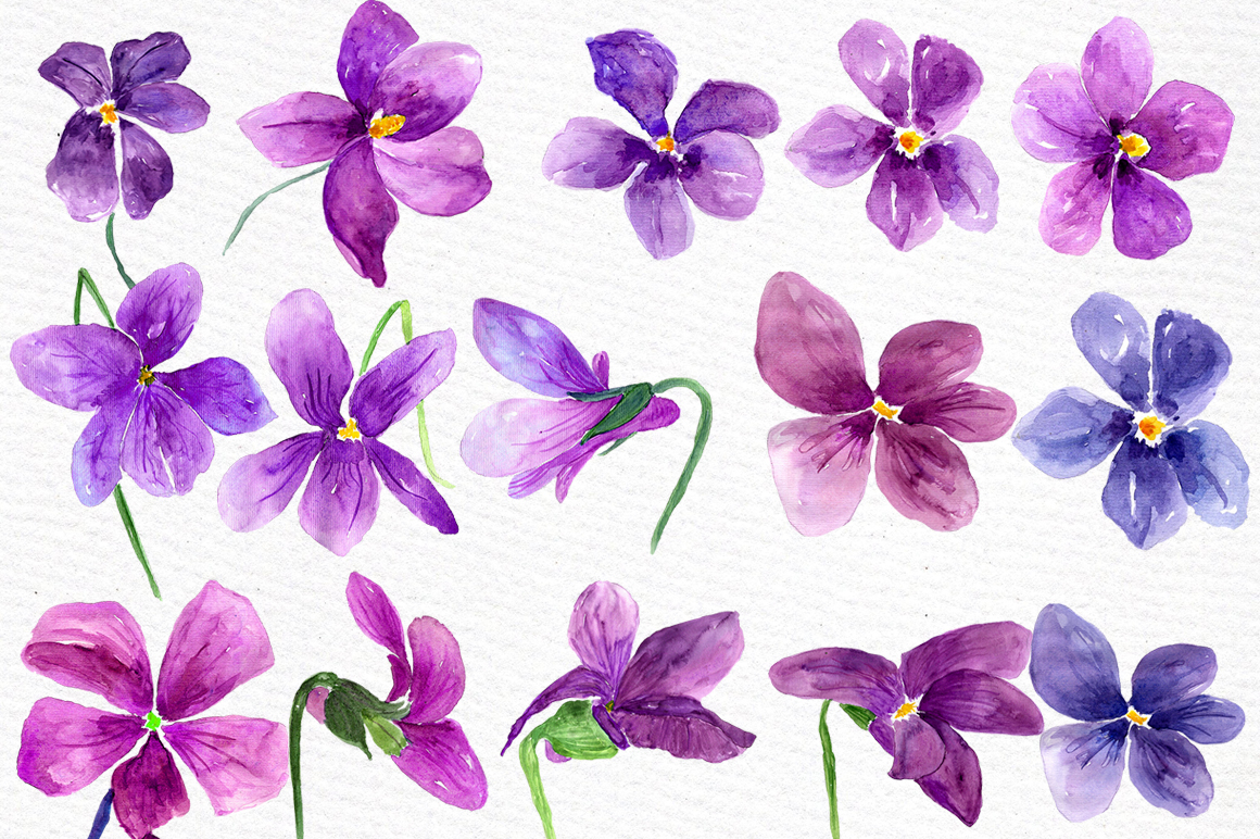 Watercolor violet flowers clipart example image 4