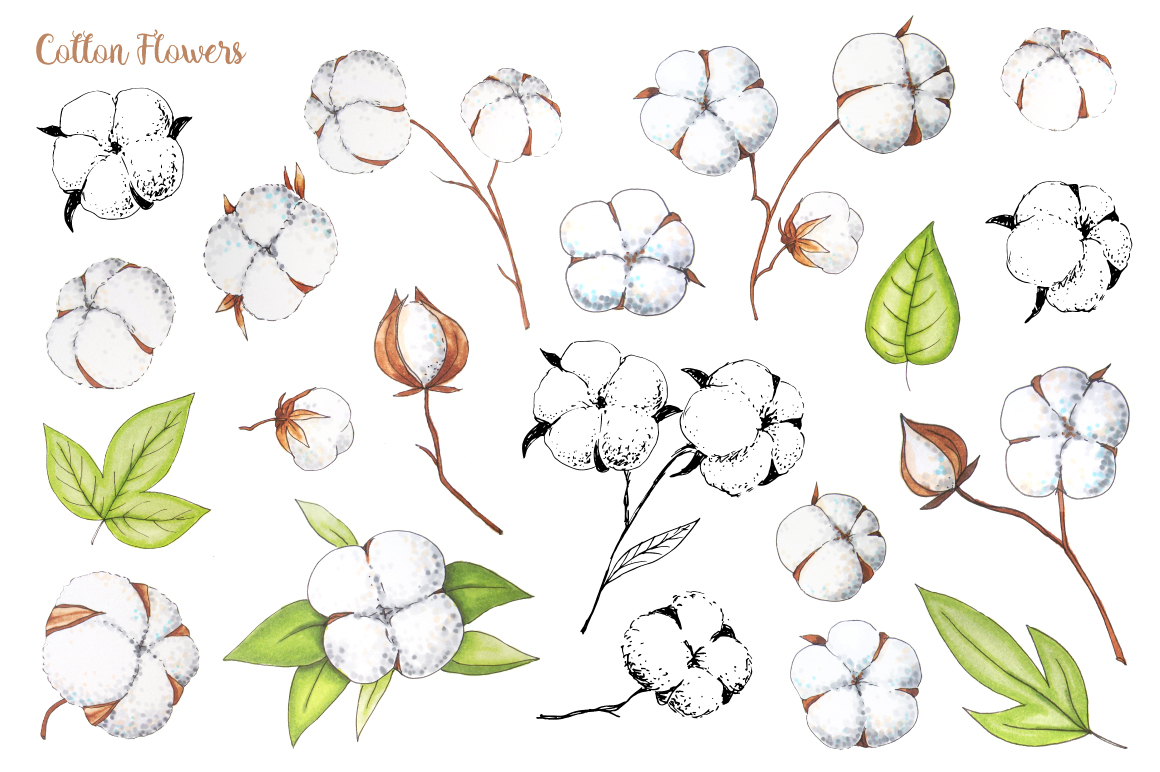 Cotton Flowers Handdrawn Set example image 2