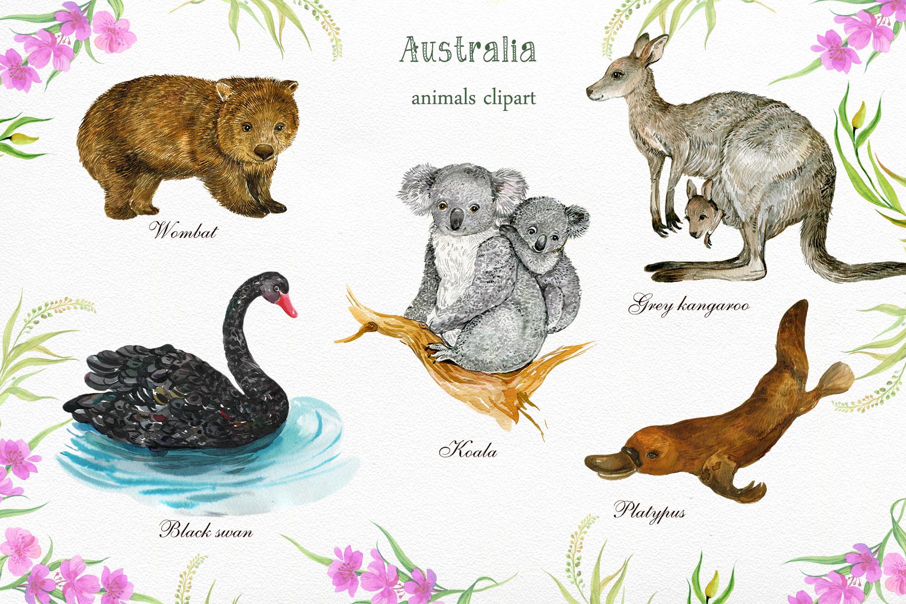 Animals Australia Watercolor example image 4