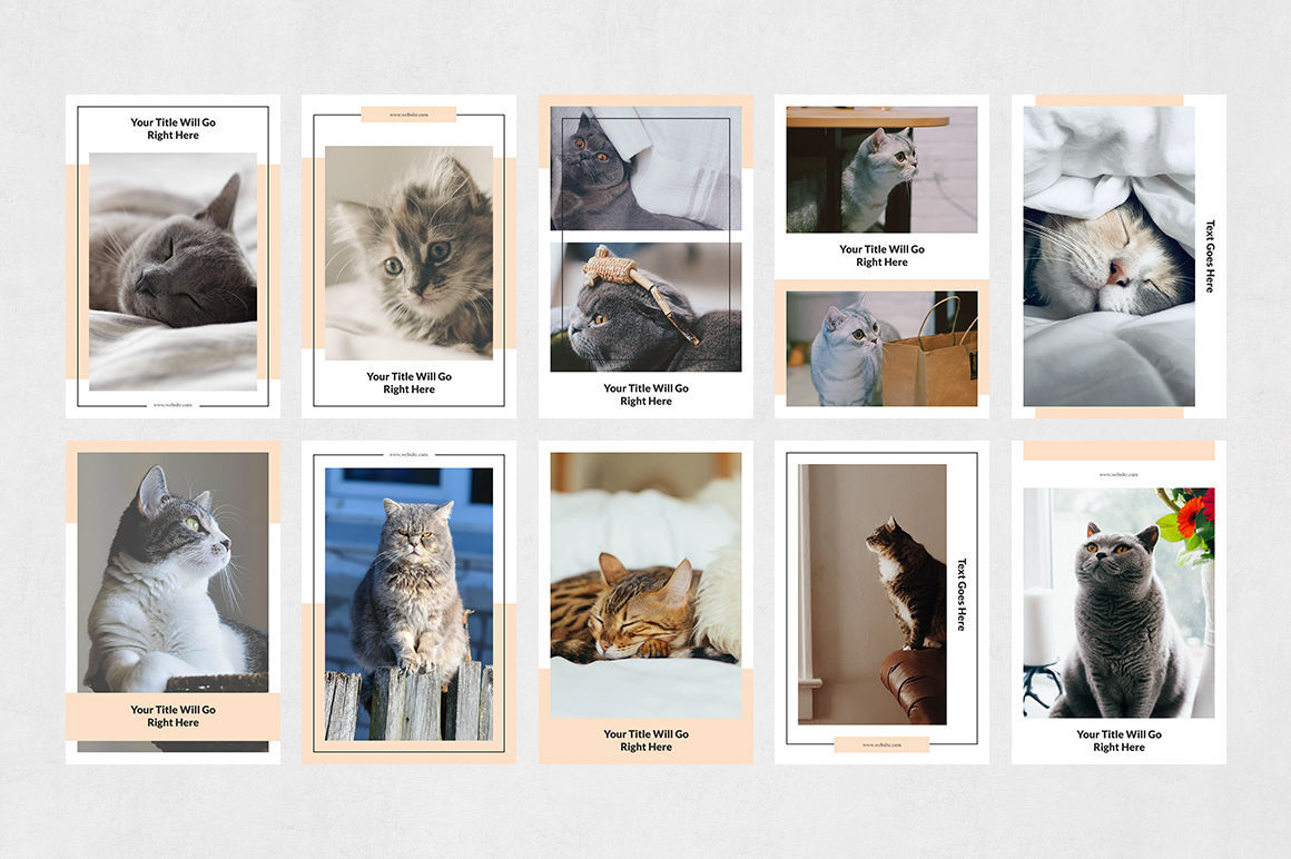 Cats Pinterest Posts example image 8