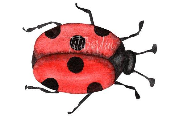 Watercolor Ladybugs Clip Art example image 4