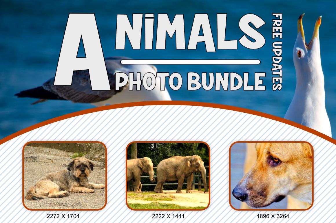 Animals Photo Bundle example image 3