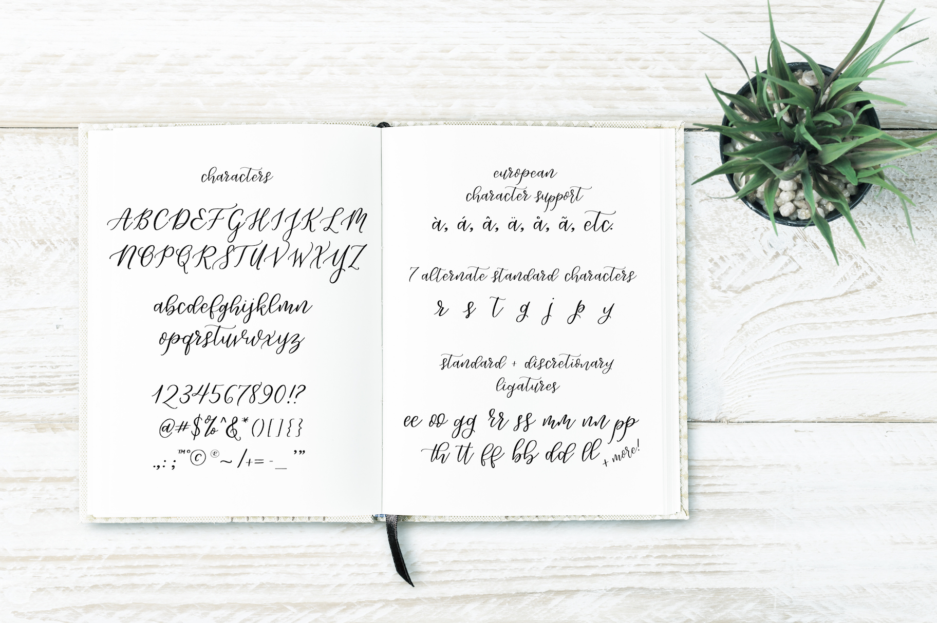Lively Script example image 4