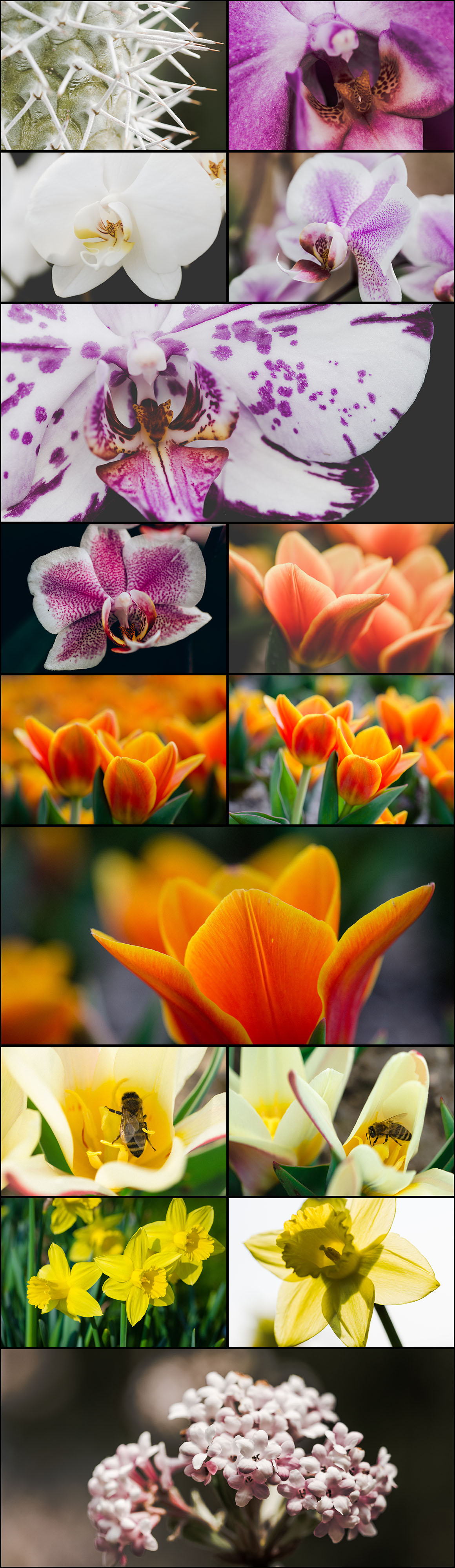Ultimate Photo Bundle 2016 from DreamyPixel – 700+ Images example image 18