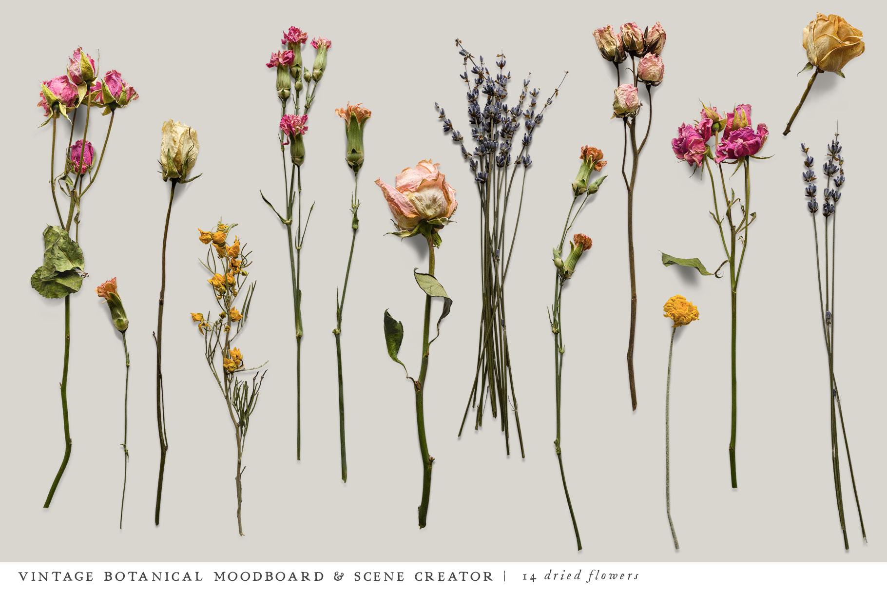 Botanical Moodboard Scene Creator example image 8