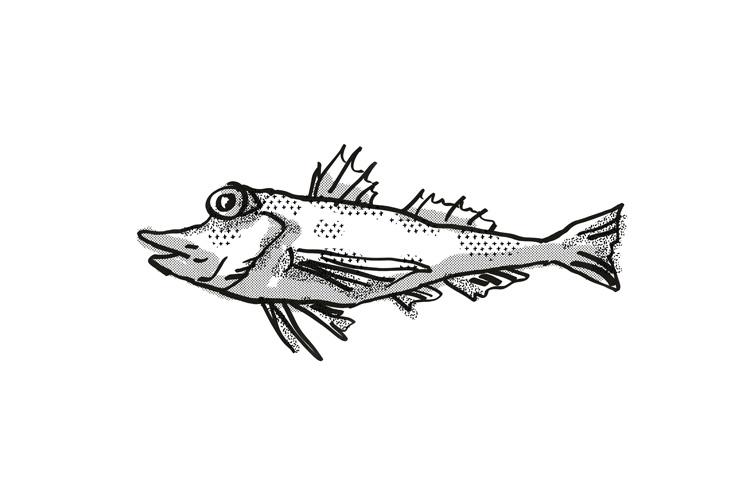 Saumarez Gurnard Australian Fish Cartoon Retro Drawing example image 1