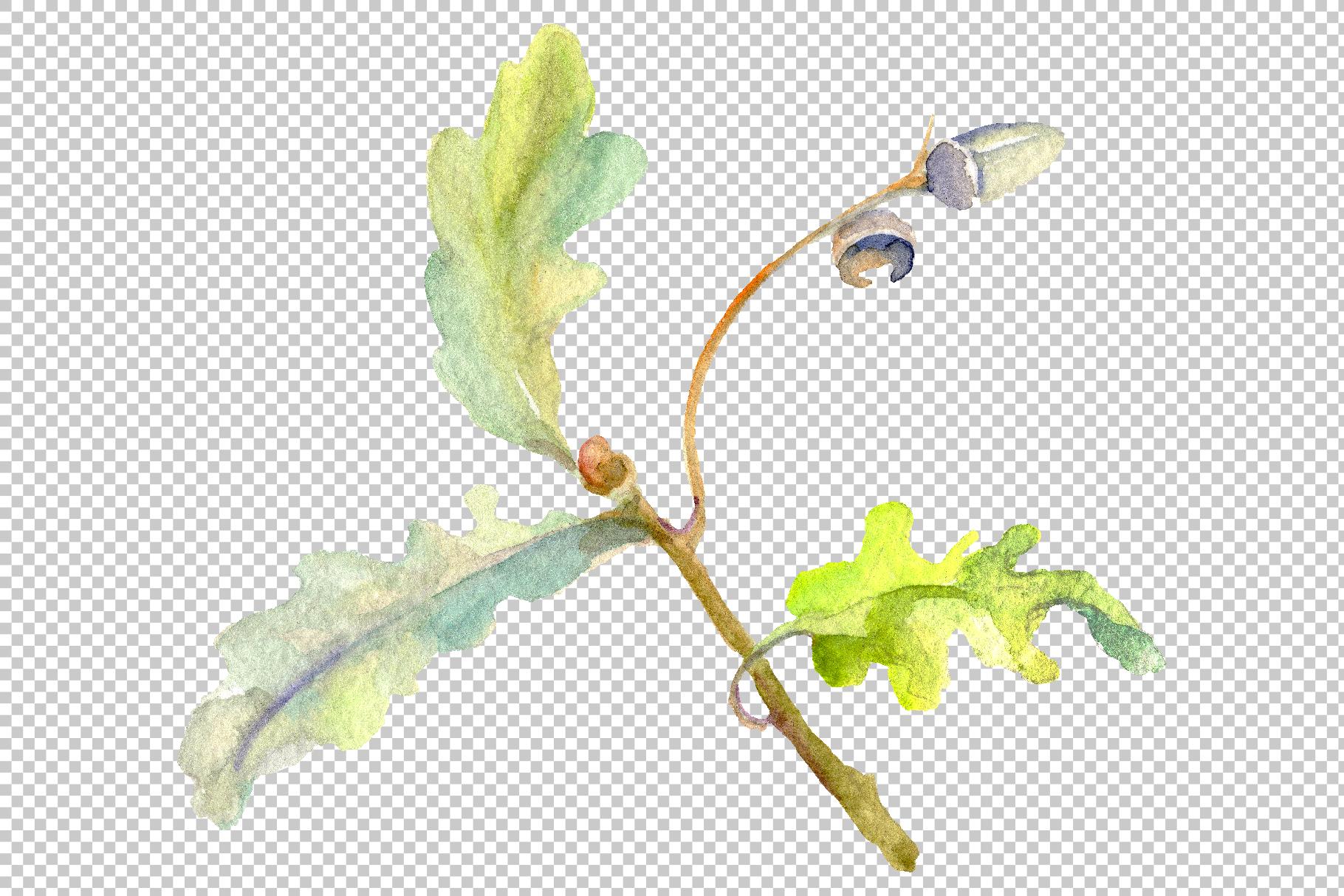 Acorn Watercolor png example image 5