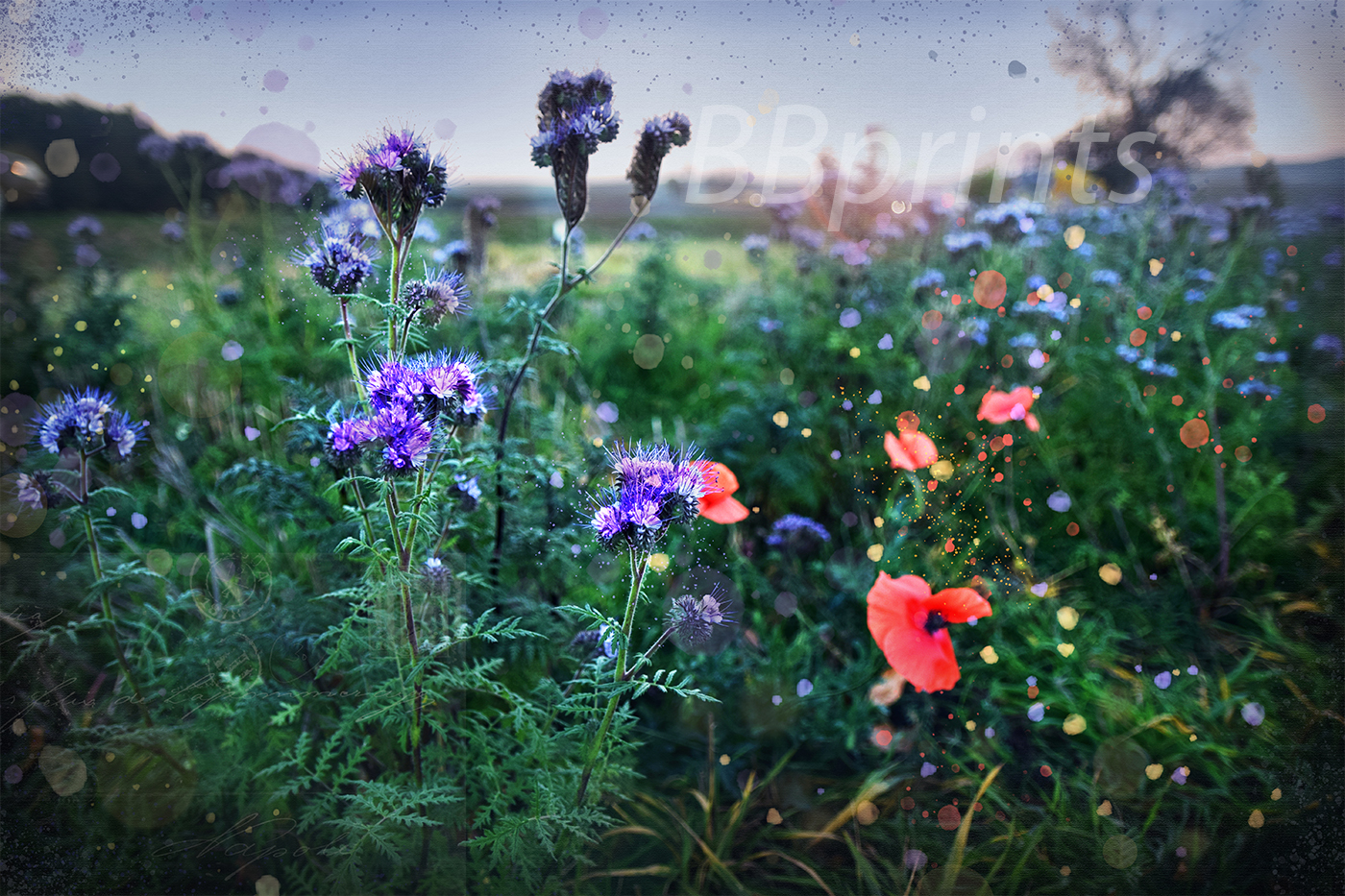 Nature photo, floral photo, summer photo, Wildflowers example image 1