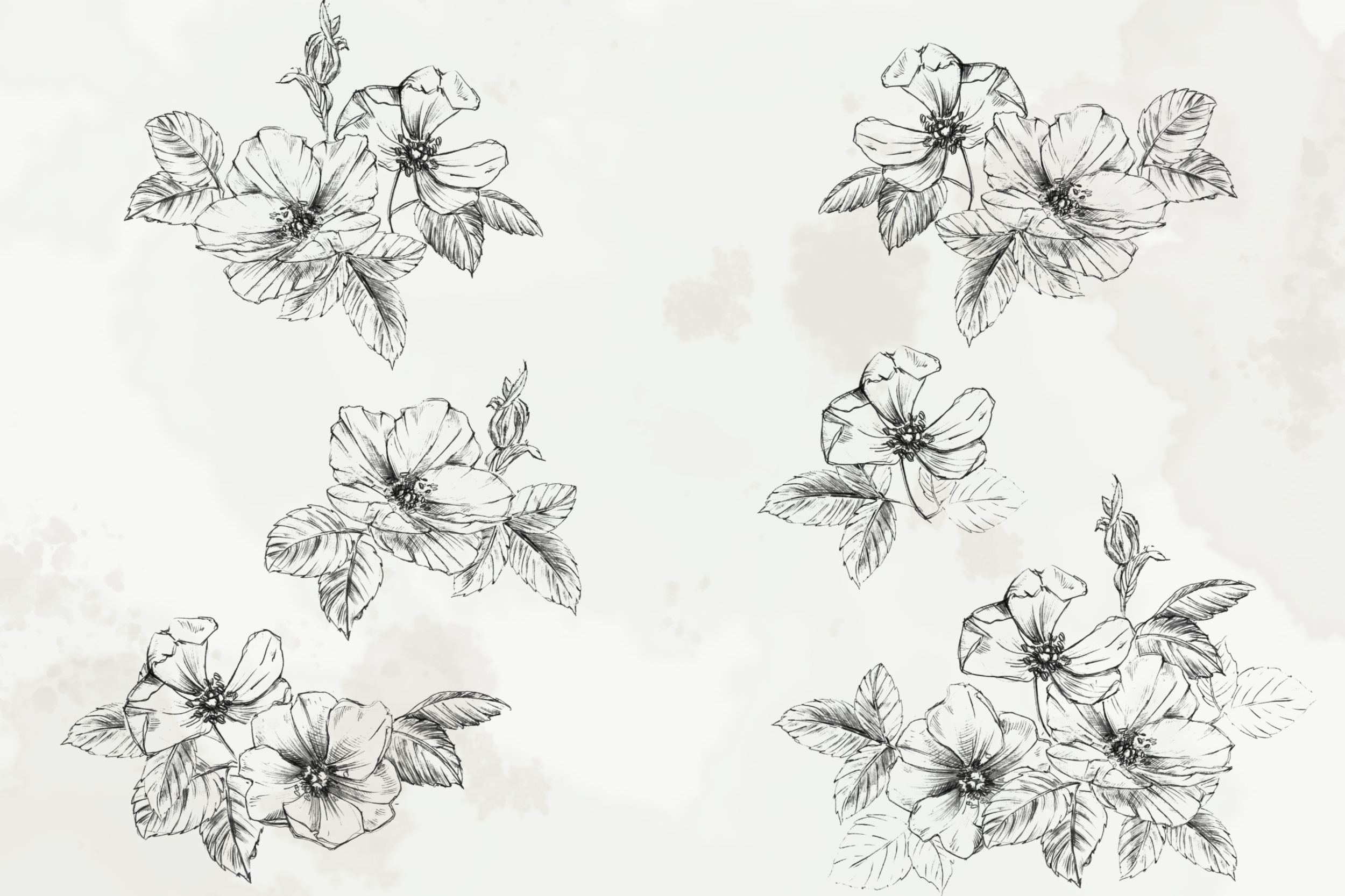 Hand Drawn Fine Art Graphic Images - Delicate wild rose. example image 2