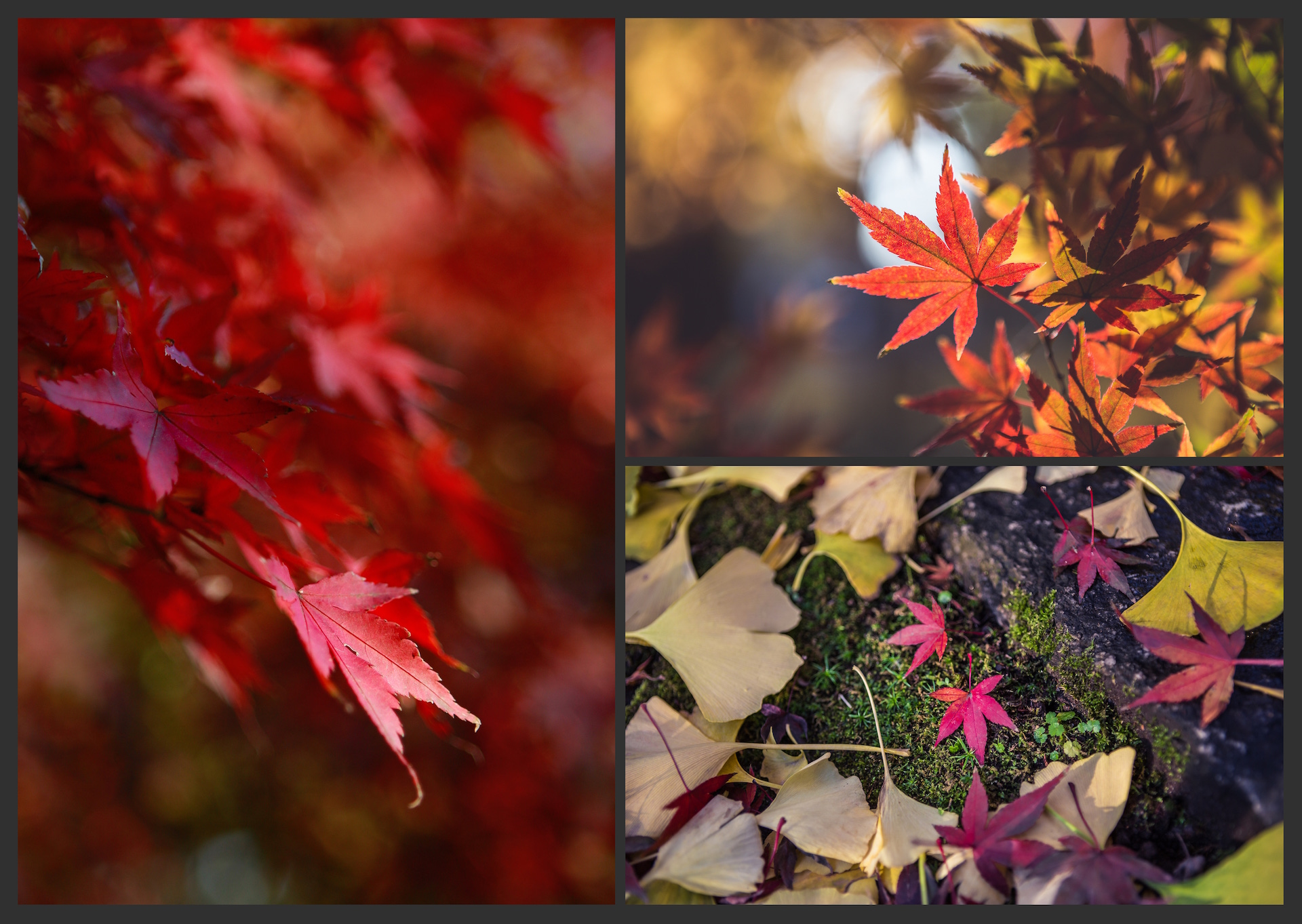 The AUTUMN LEAVES Pack example image 3
