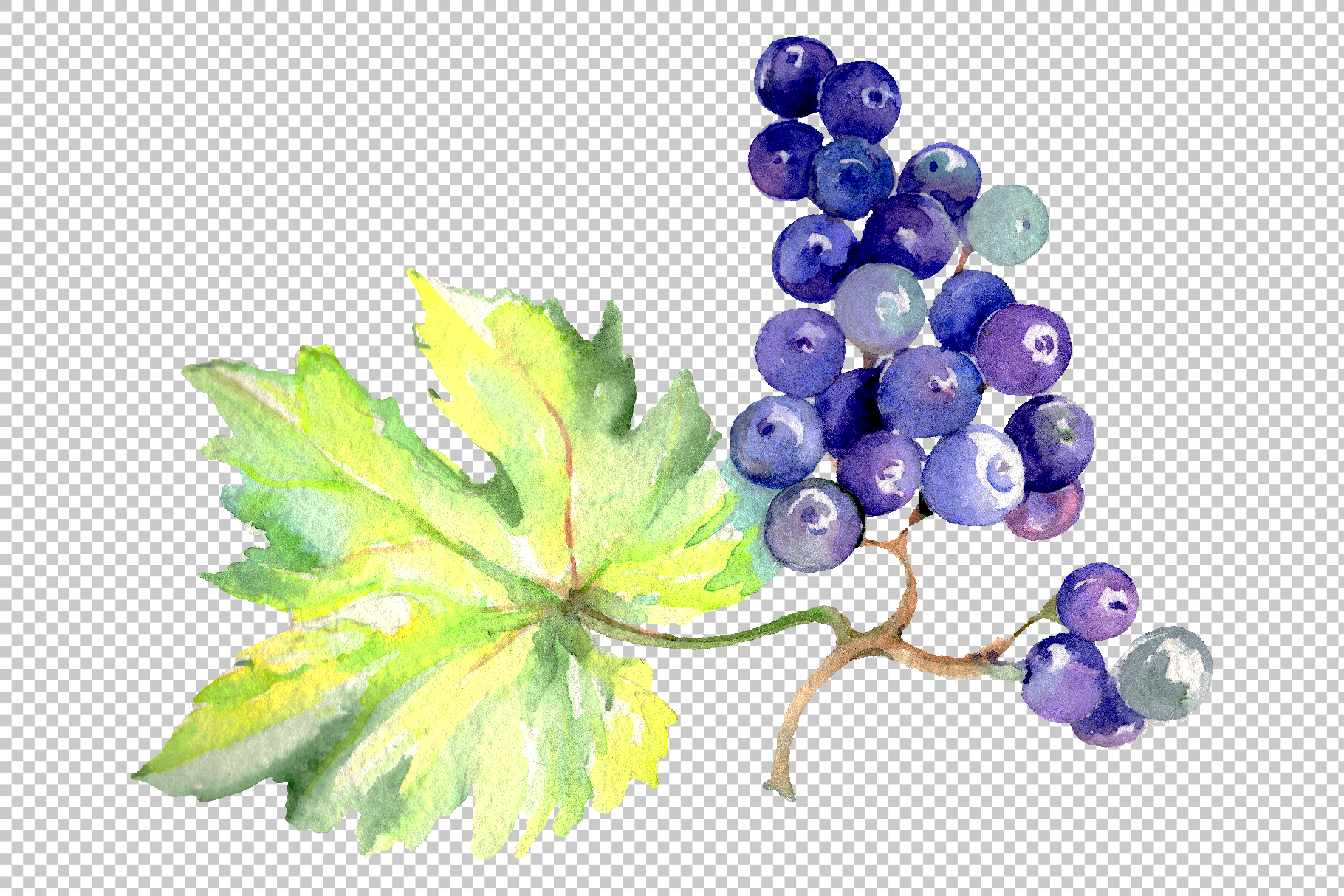Grapes Watercolor png example image 9