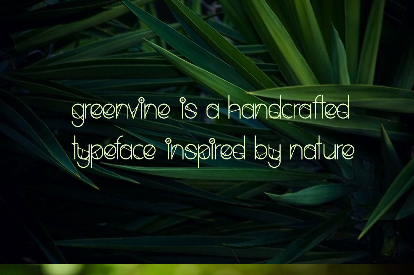 Greenvine Display Font example image 2