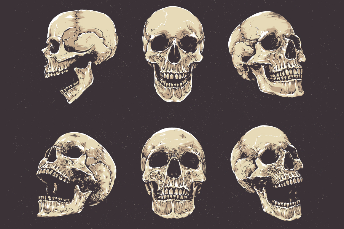 Anatomic Skulls | Vector Pack example image 2