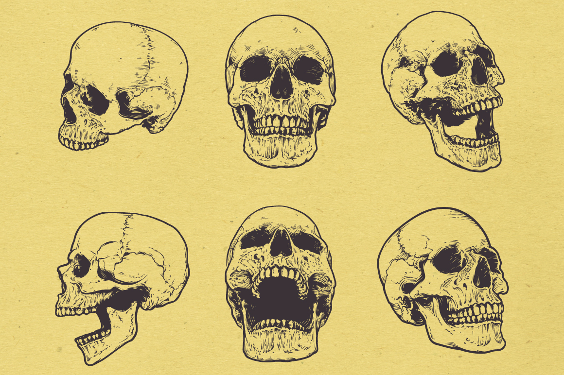 Anatomic Skulls | Vector Pack example image 4