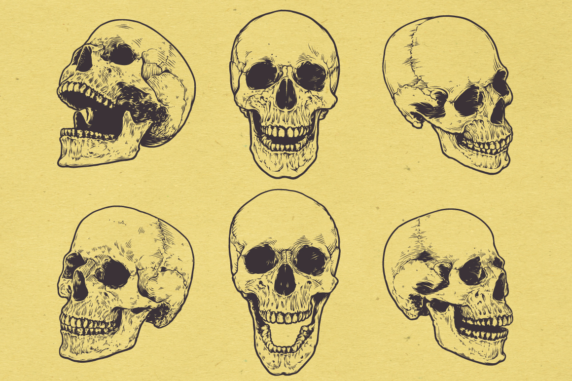 Anatomic Skulls | Vector Pack example image 5