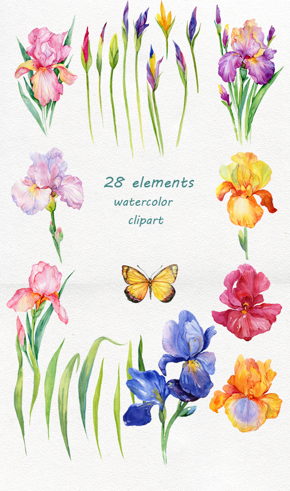 iris flowers. watercolor clipart example image 2