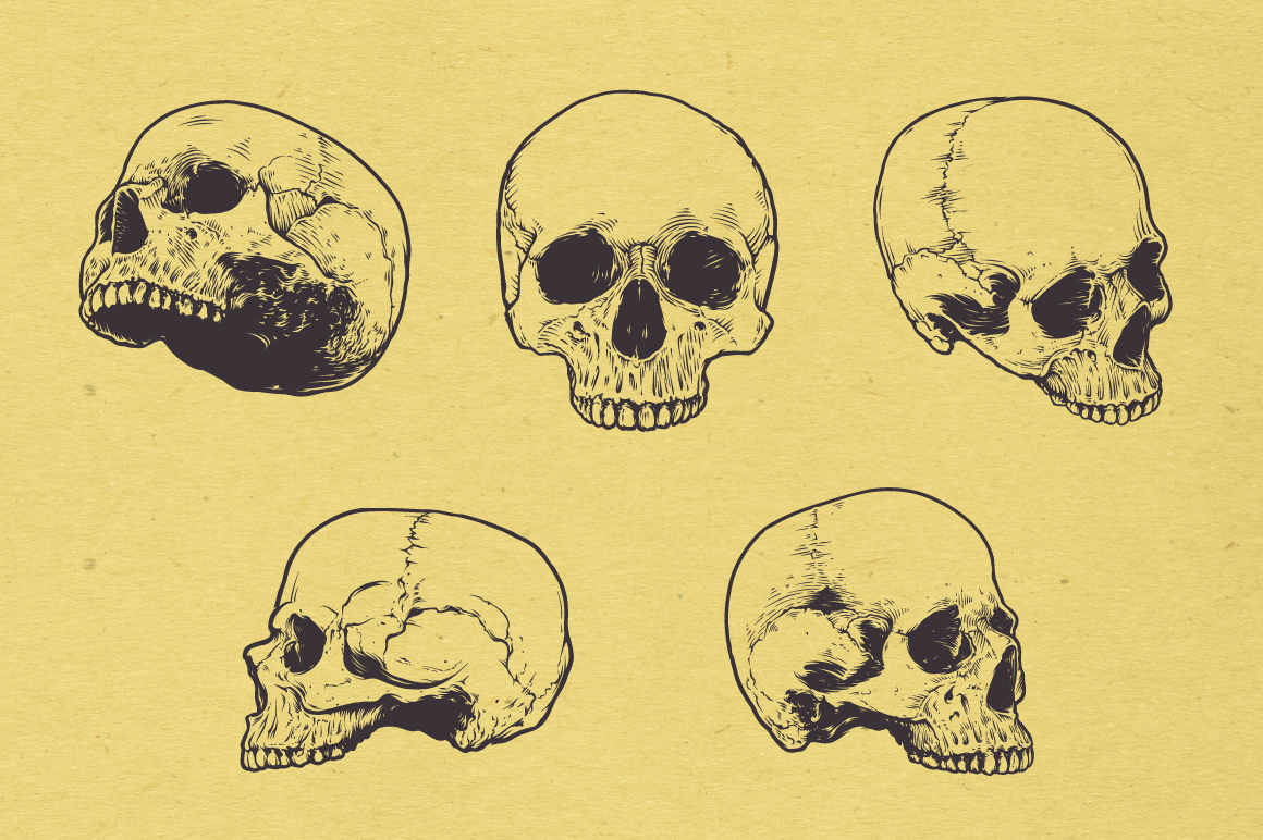 Anatomic Skulls | Vector Pack example image 6