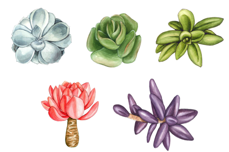 Watercolor Succulents Cliparts, Floral Wreath Wedding example image 3