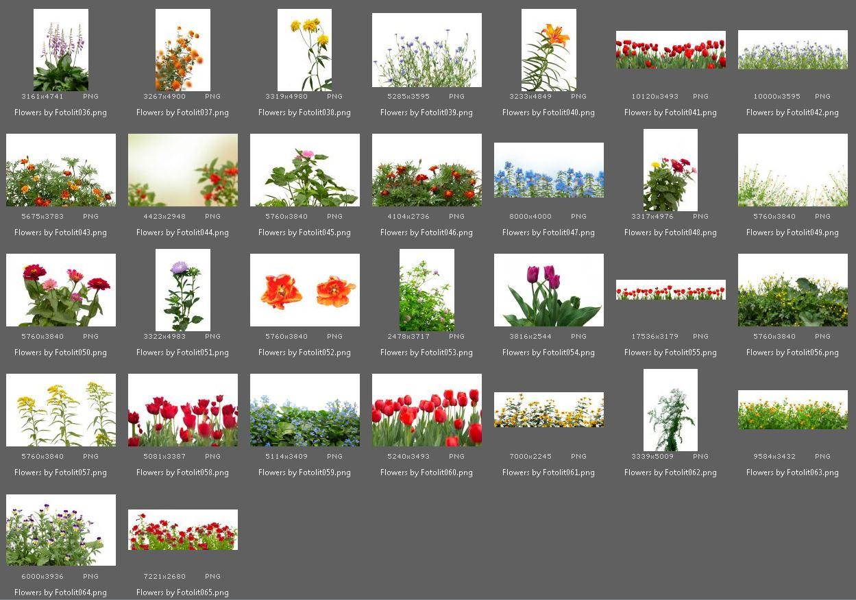 65 Flower Photo Overlays example image 5