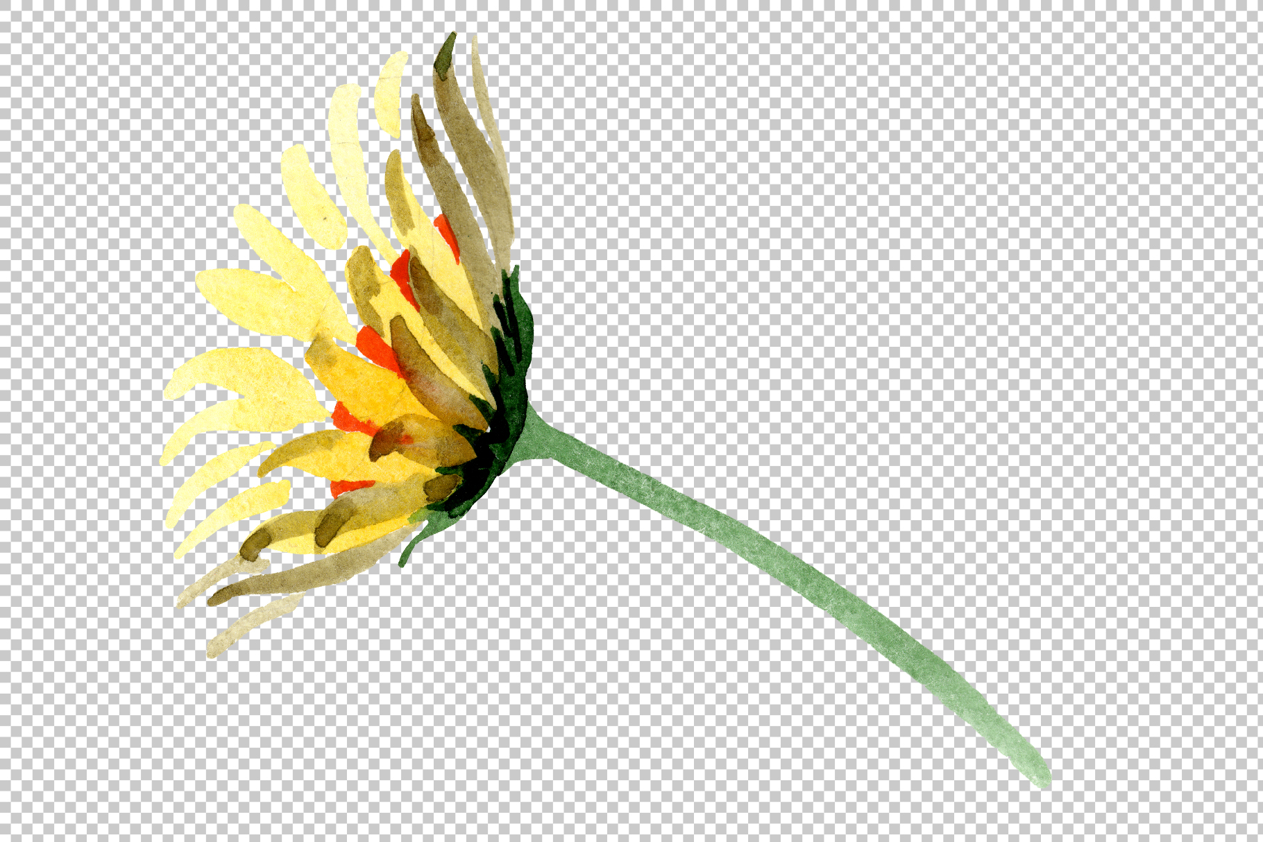 Yellow chamomile Watercolor png example image 10