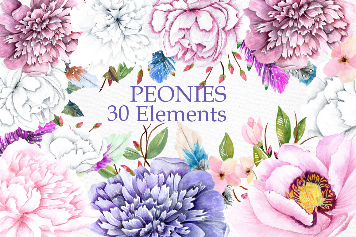 Watercolor peonies clipart example image 1