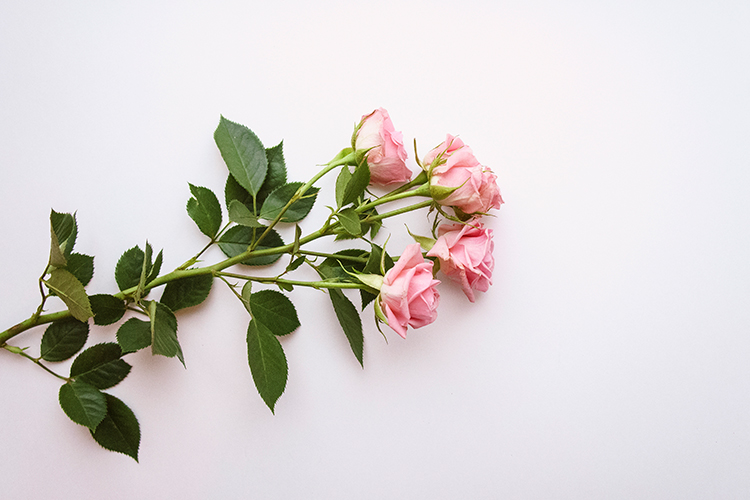 Pink roses example image 1