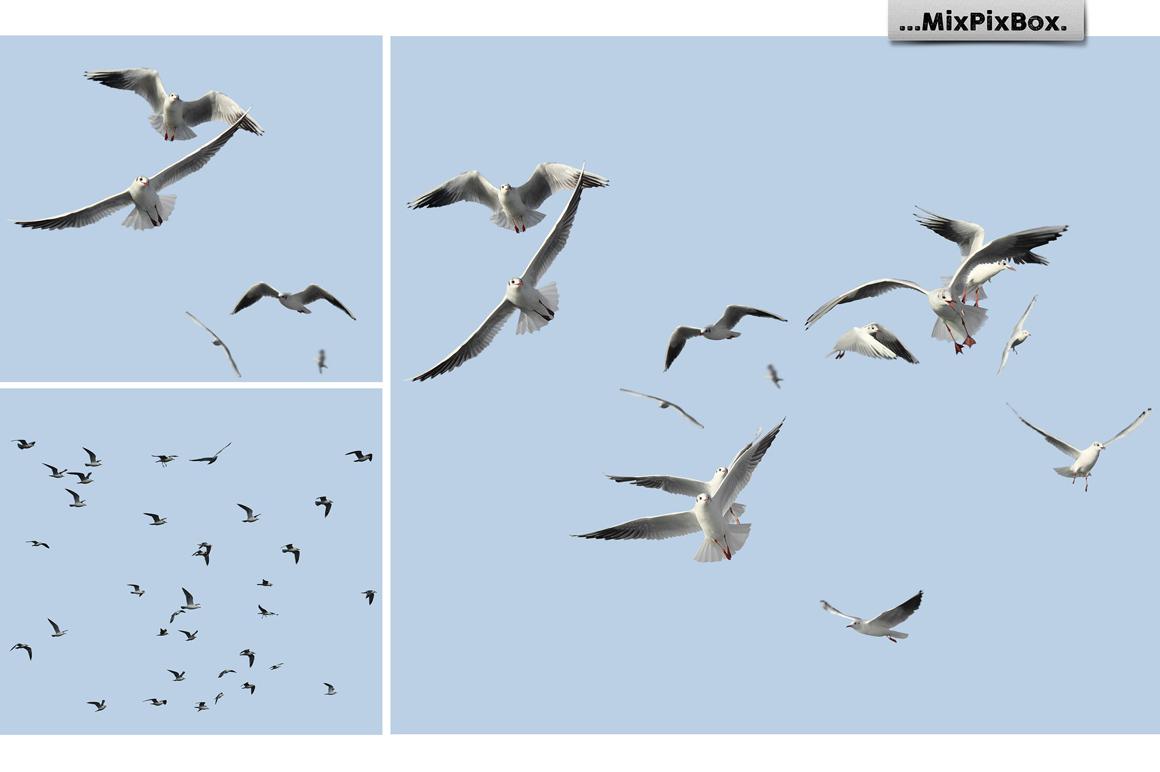 Seagulls Photo Overlays example image 6