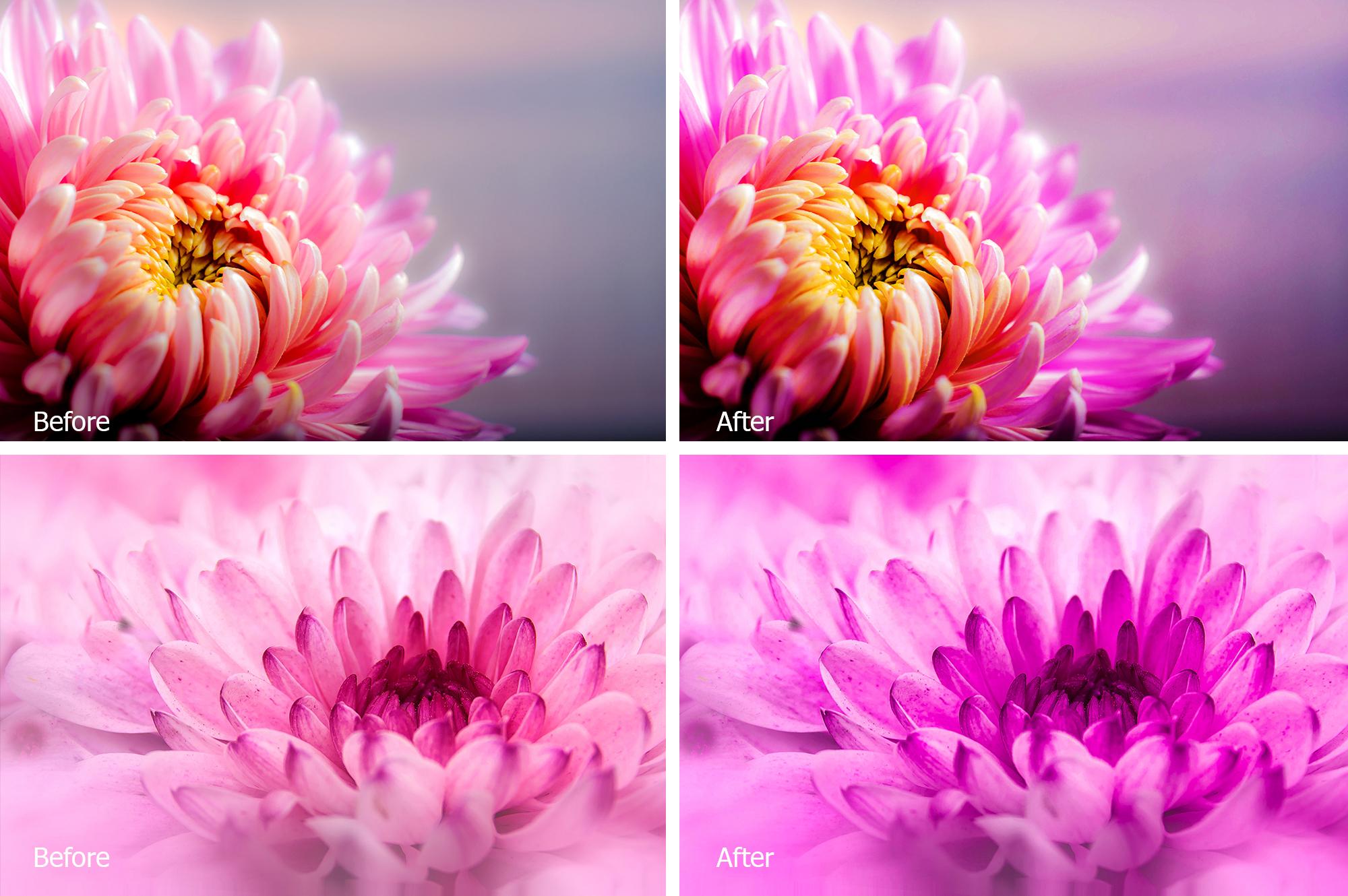 Chrysanthemum Lr Presets example image 2