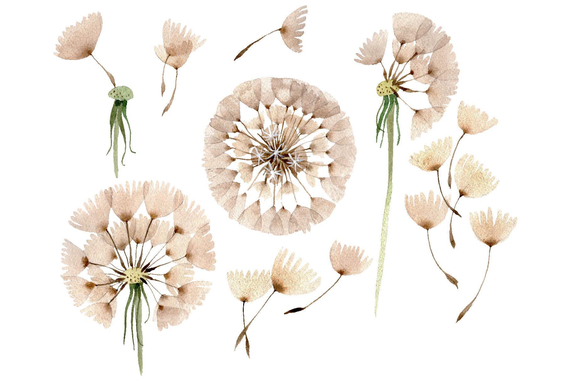 Dandelion Watercolor png example image 1