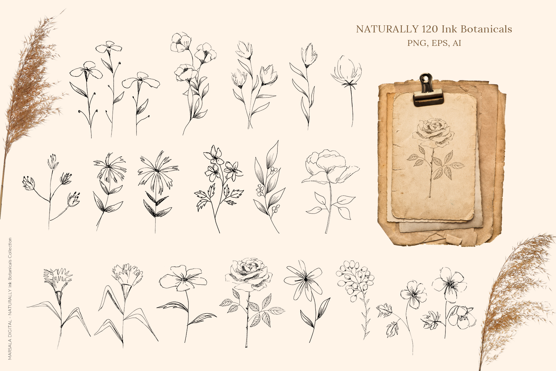 Ink Botanicals Vintage Wildflowers Ink Botanicals Vintage example image 10