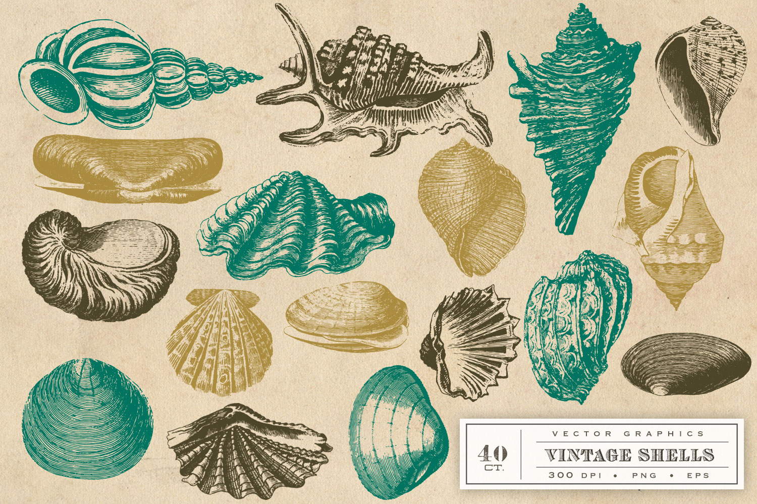 Vintage Shell Vector Graphics example image 3