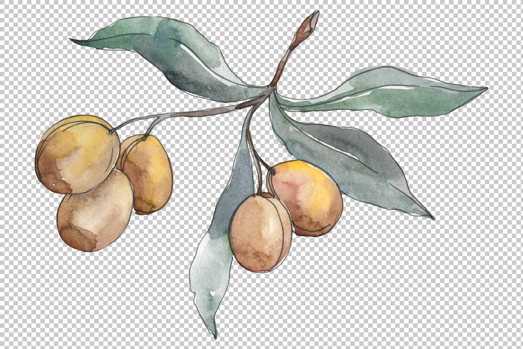 Olives 2 Watercolor png example image 2