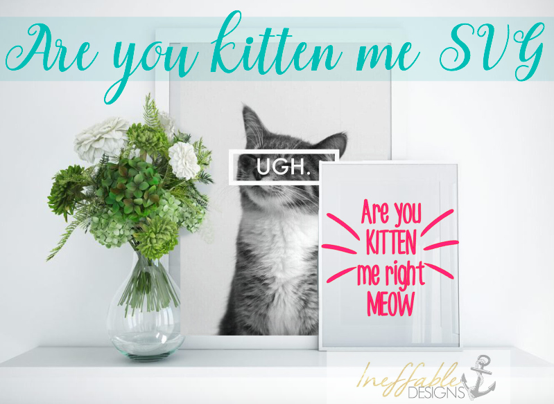 Are You Kitten Me Right Meow SVG cut file example image 1