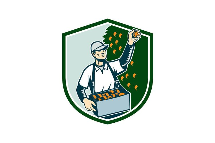 Fruit Picker Worker Picking Plum Shield example image 1